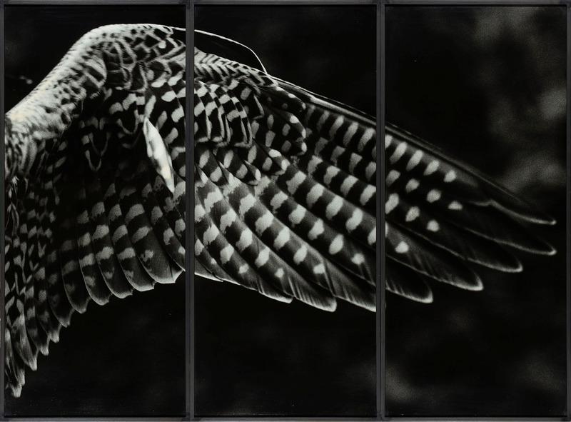 S7 bb faucon.large